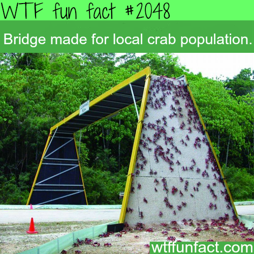 Bridge made for local crab population -WTF fun facts