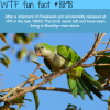 brooklyns parakeets wtf fun facts