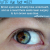 brown eyes are actually blue wtffunfacts