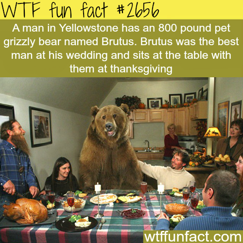 Brutus the Bear and His Man Friend Casey - WTF fun facts