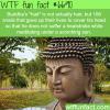 buddhas hair wtf fun fact