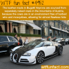 bugatti facts wtf fun facts