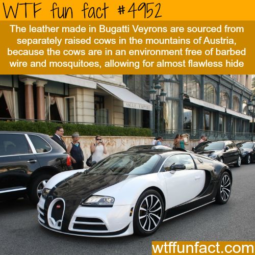 Bugatti facts - WTF fun facts