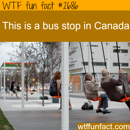 Bus Stop In Canada - WTF fun facts