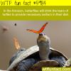 butterflies drink the tears of turtles wtf fun