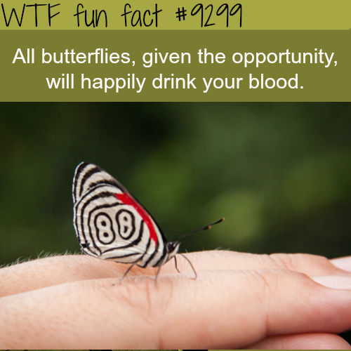 Butterflies will drink your blood - WTF fun fact