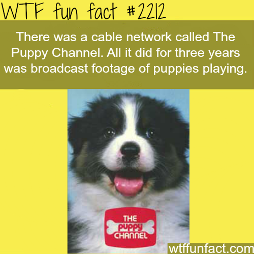 "Cable network ""puppy channel"" - WTF fun facts"