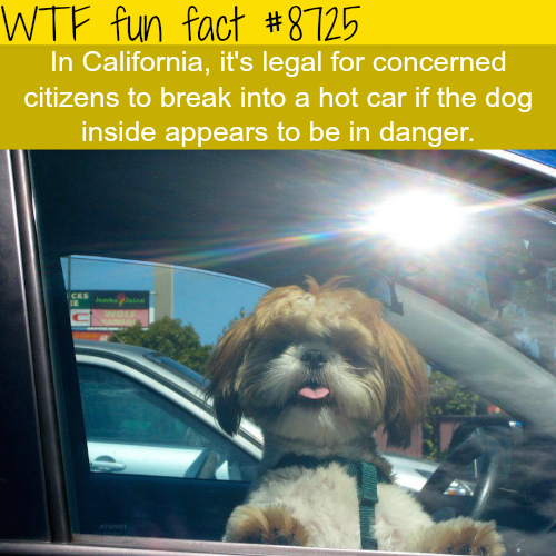 California laws - WTF fun facts