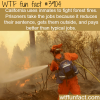 california pay inmates to fight forest fires wtf