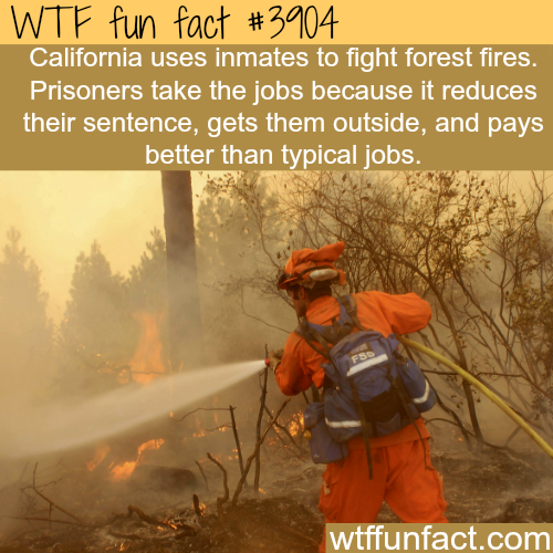 California pay inmates to fight forest fires - WTF fun facts