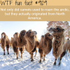 camels wtf fun fact