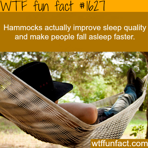 Can Hammocks improve sleep quality - WTF fun facts