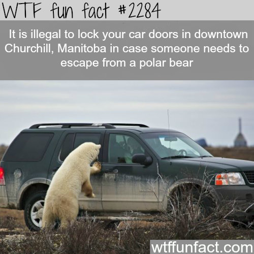 Canada's awesome laws -WTF fun facts