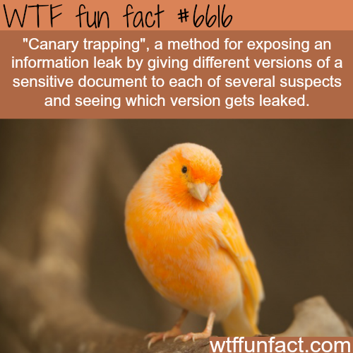 Canary trapping - WTF fun facts