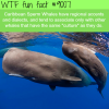 caribbean sperm whales wtf fun facts