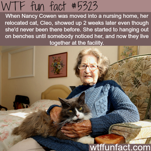 Cat followed her owner to the nursing home - WTF fun facts