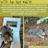 cat refused to leave its owners grave wtf fun