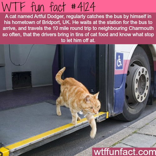 Cat takes the bus regularly -  WTF fun facts