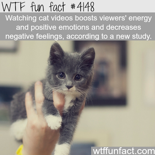 Cat videos are good for you -  WTF fun facts