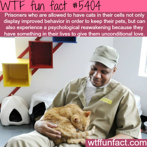 Cats improve the behavior of prison inmates - WTF fun facts