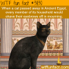 cats in ancient egypt wtf fun facts