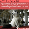 cats in the hermitage museum russia wtf fun