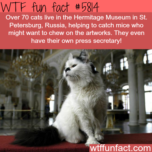 Cats in the Hermitage Museum
