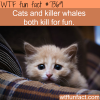 cats kill for fun wtf fun facts