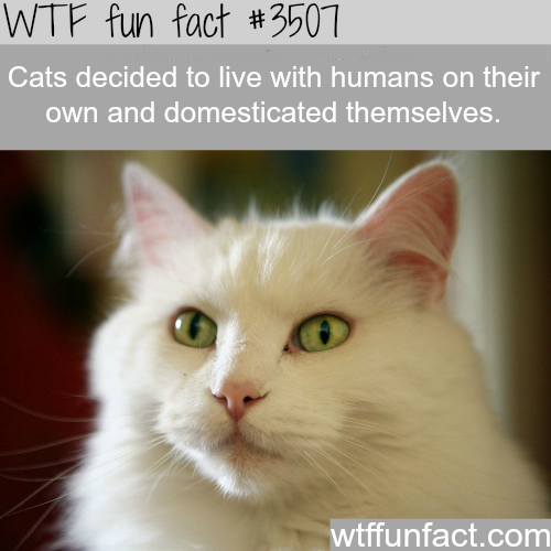 Cats lived with humans on their own -  WTF fun facts