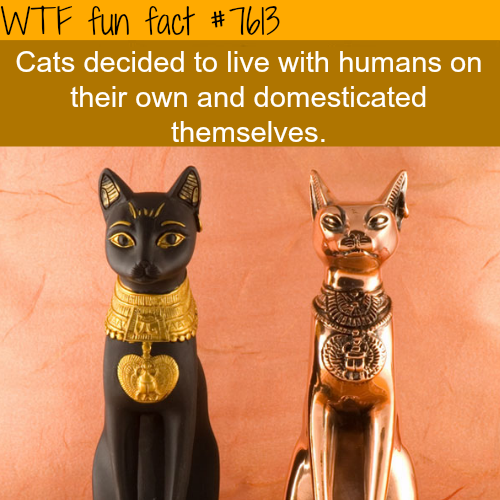 Cats - WTF fun facts