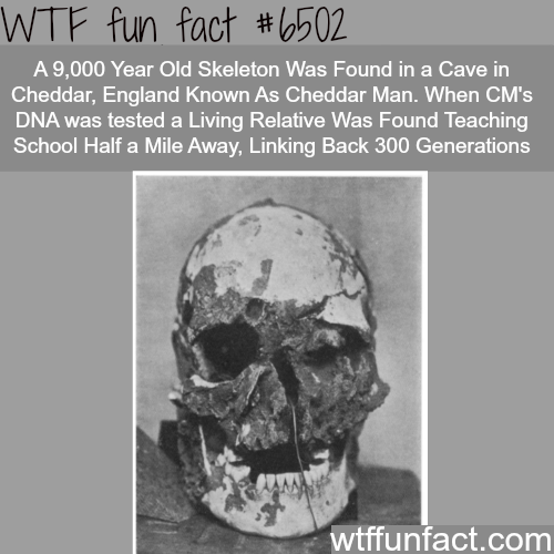 Cheddar Man - WTF fun facts