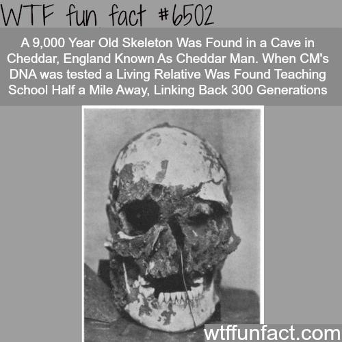 Cheddar Man - WTF fun facts