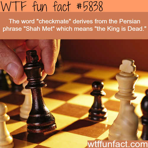 Chess facts - WTF fun facts