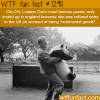 chi chi the panda wtf fun fact