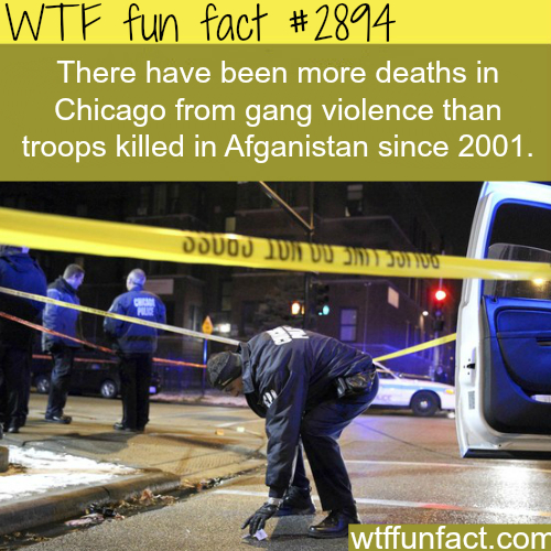 Chicago gang violence -  WTF fun facts