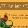 chicken and t rex