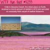 chiles atacama desert bloom wtf fun facts