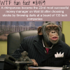 chimpanzee is more successful at selecting stocks