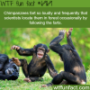 chimpanzees fart wtf fun fact