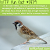 chinas campaign to kill millions of sparrows