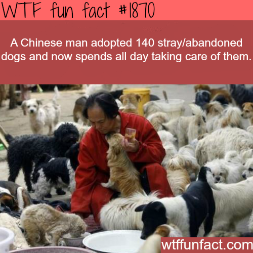 Chinese man adopt stray dogs -WTF fun facts