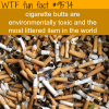 cigarette butts wtf fun fact