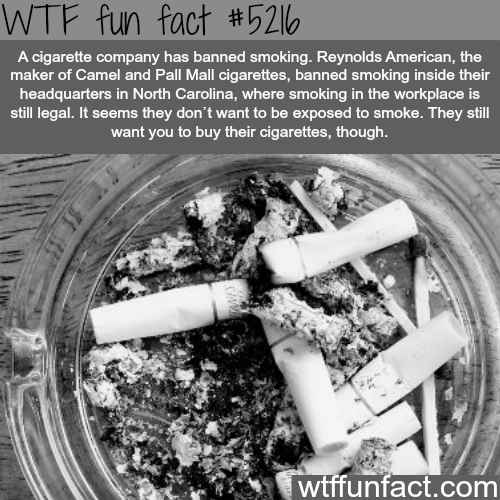 Cigarette company bans smoking - WTF fun facts