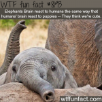 click here to help the the engendered elephant