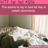 clinomania wtf fun facts