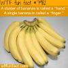 cluster of bananas wtf fun fact