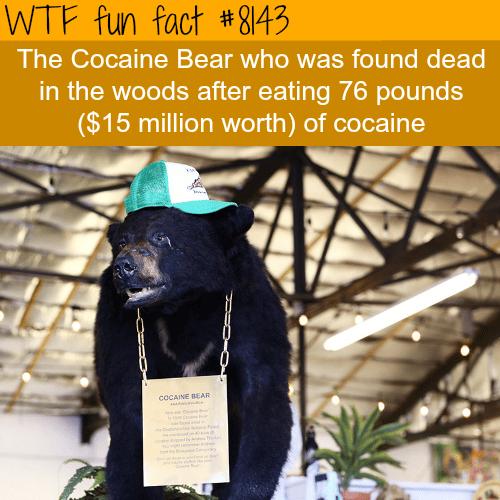 Cocaine bear - WTF fun fact