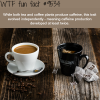 coffee and tea wtf fun fact