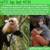 colombian women raised by capuchin monkeys wtf