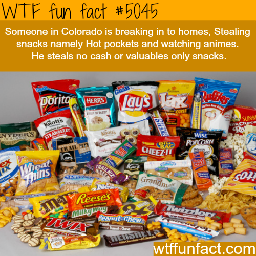 Colorado's snack thief - WTF fun facts